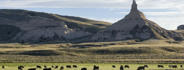 Nebraska - Buffalo graze at the base of Chimney Rock - See America - Visit USA Travel Guide