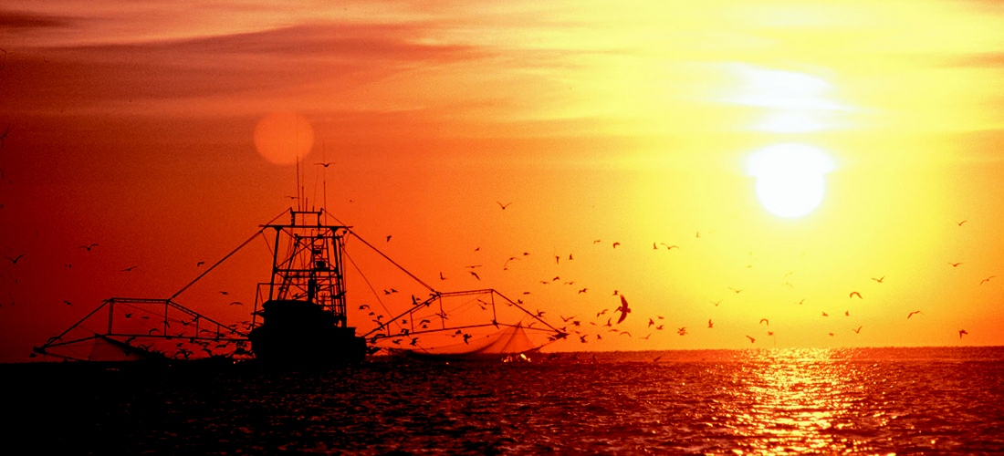 Commercial fishing off the coast of Mississippi.