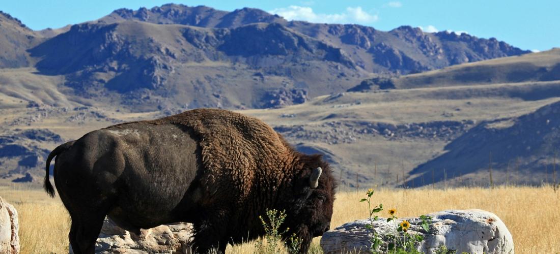 The Antelope Island Tour | Great Salt Lake | Salt Lake ...