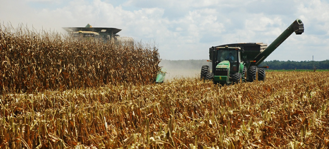 Harvesting Corn in Mississippi