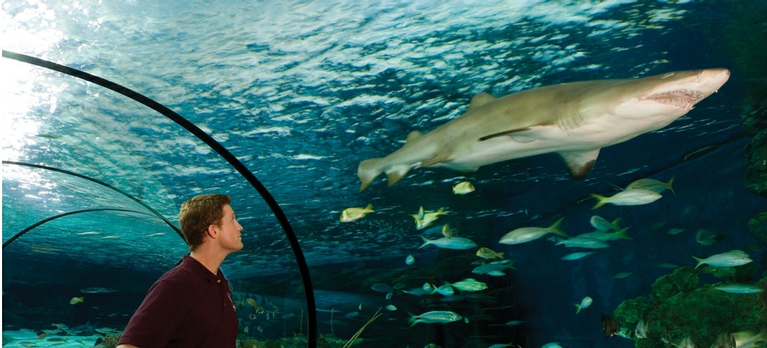 Ripley's Aquarium of Myrtle Beach is literally teaming with life – our 10,000 exotic sea creatures comprise more than 350 individual species.